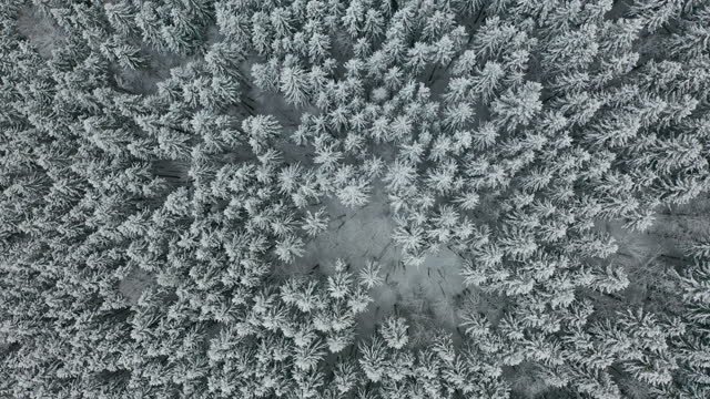 Aerial view. Winter season. Snowy mountain forest aerial shot Breathtaking natural landscape, frozen forest.