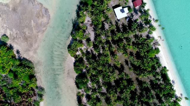 Aerial view with a drone over an island's peninsula in French Polynesia. We can see palm tree forest and golden beach near tropical water. Paradise for relaxing holidays under the sun. An atoll in the Pacific Ocean. Travel tropical concept Aerial view over the peninsula of Fakarava Island in French Polynesia. The wonderful island is in the Pacific Ocean, perfect for tourism and holidays. We can see the waves come and go on the beach. The island is an atoll only covered with beach and trees, near a turquoise lagoon.  This is a world heritage site of Unesco under the Man and the Biosphere Programme (MAP). oceania stock videos & royalty-free footage