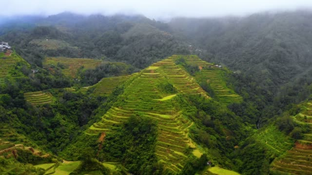 Aerial view with a drone over the beautiful landscape of rice terraces in Banaue, Philippines. Wonderful agriculture in a valley in the middle of mountains in a beautiful day - aerial view with a drone 4K Banaue's rice terraces in the middle of a valley. One of the most beautiful agriculture in Philippines, with the most wonderful view.  Perfect landscape in an amazing place, with the respect of environment banaue stock videos & royalty-free footage