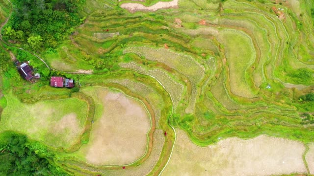 Aerial view with a drone over the beautiful landscape of rice terraces in Banaue, Philippines. Wonderful agriculture in a valley in the middle of moutains in a beautiful day - aerial view with a drone 4K Banaue's rice terraces in the middle of a valley. One of the most beautiful agriculture in Philippines, with the most wonderful view.  Perfect landscape in an amazing place, with the respect of environment banaue stock videos & royalty-free footage
