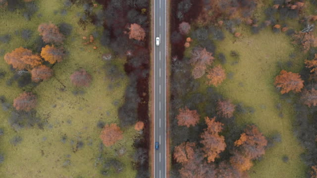 aerial view with dolly forward of scenic route at senjogahara marshland in autumn season, nikko, japan. - arteria filmów i materiałów b-roll