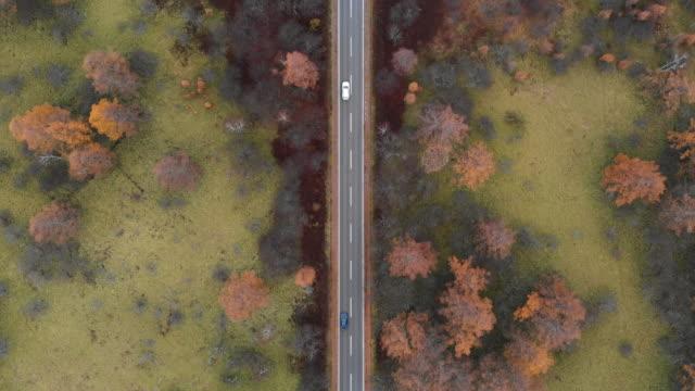 aerial view with dolly forward of scenic route at senjogahara marshland in autumn season, nikko, japan. - strada transitabile video stock e b–roll