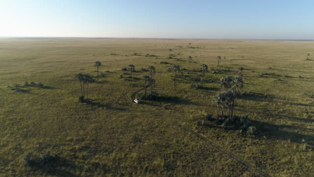 Aerial view,distant following shot of safari vehicle driving through the grasslands of Botswana Aerial view,distant following shot of safari vehicle driving through the grasslands of Botswana botswana stock videos & royalty-free footage