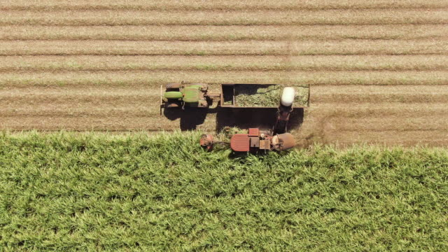 aerial: wide and closeup variety of shots showing harvesting machine cutting down ripe sugarcane crop ready to be transported and refined. sustainable biofuel and organic food concept. - биомасса возобновляемая энергия стоковые видео и кадры b-roll
