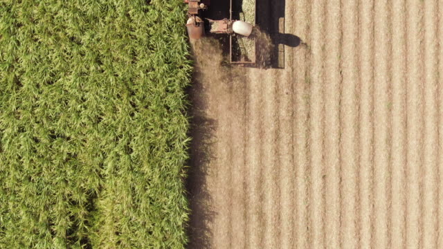 aerial: wide and closeup variety of shots showing harvesting machine cutting down ripe sugarcane crop ready to be transported and refined. sustainable biofuel and organic food concept. - мембрана клетки стоковые видео и кадры b-roll