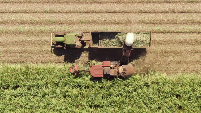 aerial: wide and closeup variety of shots showing harvesting machine cutting down ripe sugarcane crop ready to be transported and refined. sustainable biofuel and organic food concept. - canna da zucchero video stock e b–roll