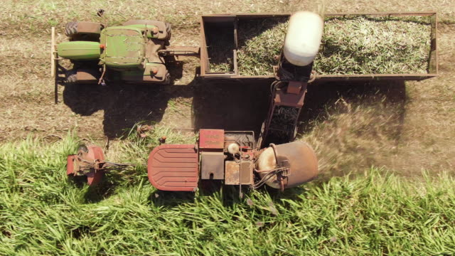 Aerial: Wide and Closeup variety of shots showing harvesting machine cutting down ripe sugarcane crop ready to be transported and refined. Sustainable Biofuel and Organic food concept. Aerial: Wide and Closeup variety of shots showing harvesting machine cutting down ripe sugarcane crop ready to be transported and refined. Sustainable Biofuel and Organic food concept. biomass renewable energy source stock videos & royalty-free footage