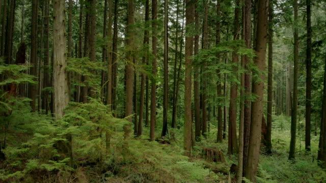 aerial wide shot der wald mit vielen bäumen - vancouver kanada stock-videos und b-roll-filmmaterial