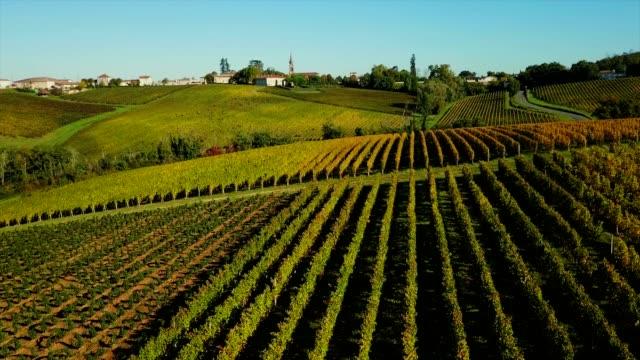 aerial wiev bordeaux vineyard, landscape vineyard south west of france - francja filmów i materiałów b-roll
