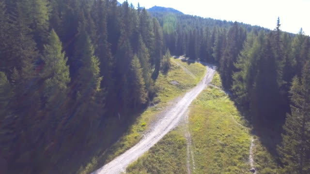 Aerial:Fly through the pine forest video