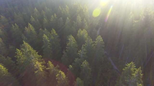 AERIAL:Sunbeam Over the pine forest video