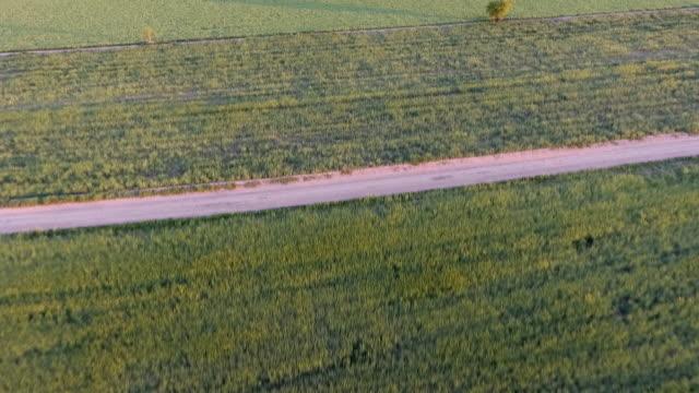 aero yeşil - lleida stok videoları ve detay görüntü çekimi
