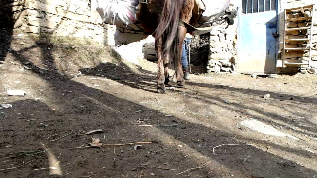 Afghanistan road with horse and people video