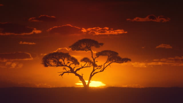 Africa. Sun inferior mirage. African timelapse sunrise. Acacia tree. video