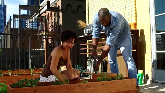African American couple roof gardening video
