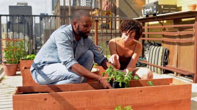 afrikanische amerikanische paar dach garten - dachgarten videos stock-videos und b-roll-filmmaterial