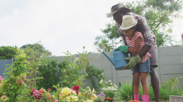 African american father and daughter watering plants Side view of an African American man and his mixed race daughter enjoying time at a garden together, kneeling, planting, a man is holding a girl who is watering the plants with a watering can, in slow motion horticulture stock videos & royalty-free footage
