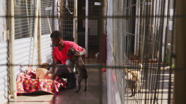 African American volunteer man in a dog shelter with a puppy