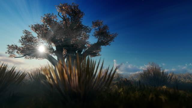 afrikanische baobab gegen schöne morgensonne, 4k - affenbrotbaum stock-videos und b-roll-filmmaterial