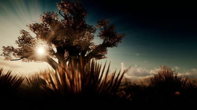 afrikanischer baobab gegen schöne morgensonne - affenbrotbaum stock-videos und b-roll-filmmaterial
