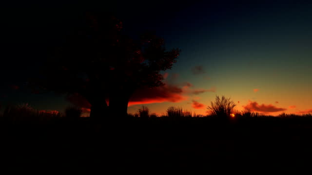 afrikansk baobab mot vackra timelapse, sunrise panorering - madagaskar bildbanksvideor och videomaterial från bakom kulisserna