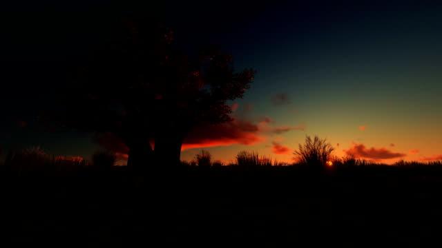 African baobab against beautiful timelapse, sunrise panning African baobab against beautiful timelapse, sunrise panning madagascar stock videos & royalty-free footage