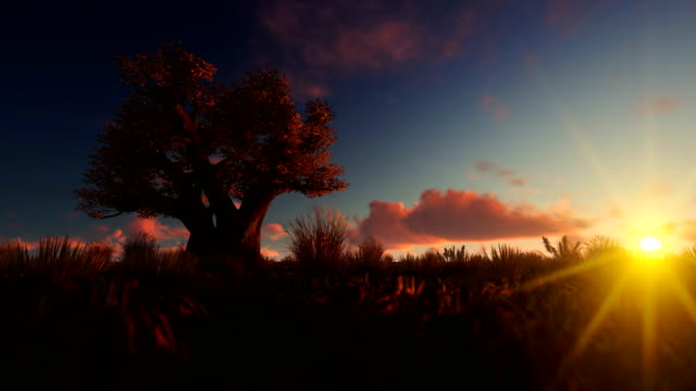afrikanischer baobab gegen zeitrafferwolken bei sonnenaufgang, 4k - affenbrotbaum stock-videos und b-roll-filmmaterial