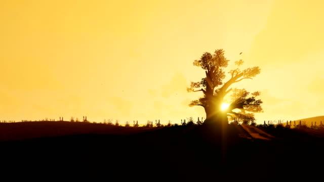 afrikanische baobab und vögel fliegen gegen schönen morgen sonne, 4k - affenbrotbaum stock-videos und b-roll-filmmaterial