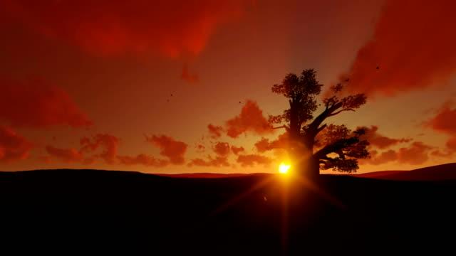 afrikanische baobab und vögel fliegen gegen sonnenuntergang, 4k - affenbrotbaum stock-videos und b-roll-filmmaterial