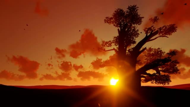 afrikanische baobab und vögel fliegen gegen sonnenuntergang, verkleinern sie die ansicht - affenbrotbaum stock-videos und b-roll-filmmaterial