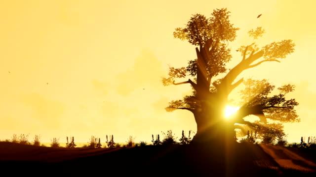 afrikanische baobab und vögel fliegen gegen schönen timelapse sunrise, zoomen - affenbrotbaum stock-videos und b-roll-filmmaterial