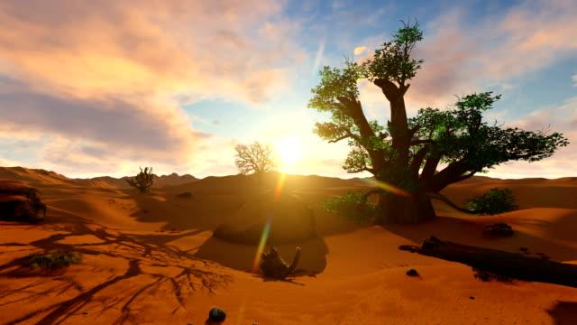 afrikanischer baobab-baum in den ebenen des taranigre-nationalparks - affenbrotbaum stock-videos und b-roll-filmmaterial