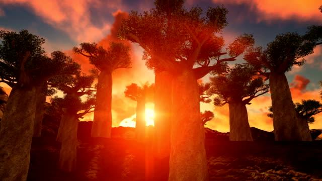 afrikanische baobab-bäume gegen schönen sonnenuntergang tilt - affenbrotbaum stock-videos und b-roll-filmmaterial