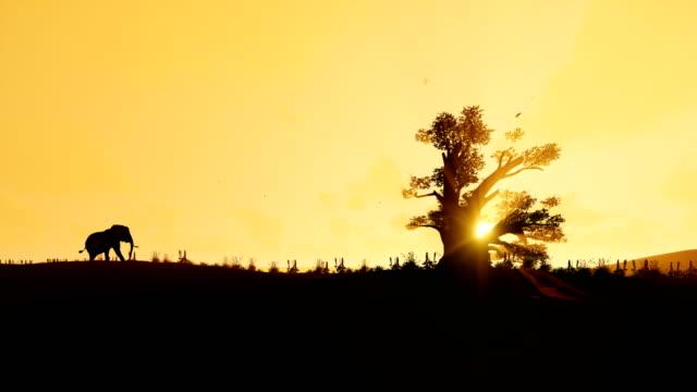 African elephant walking towards a baobab tree agains beautiful sunrise, 4K
