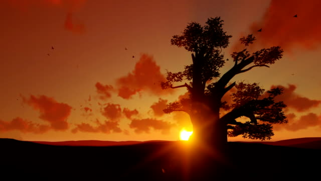 African elephant walking towards a baobab tree agains beautiful sunset, zoom out African elephant walking towards a baobab tree agains beautiful sunset, zoom out tanzania stock videos & royalty-free footage