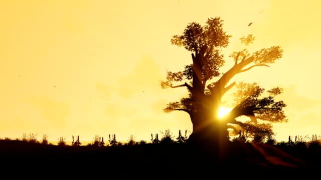 afrikanische elefanten zu fuß in richtung eines baobab baum gegen sonnenaufgang, verkleinern - affenbrotbaum stock-videos und b-roll-filmmaterial