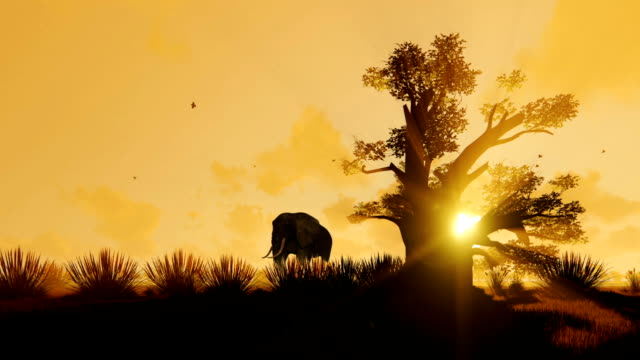 African Elephant walking with Baobab tree against beautiful morning sunrise, zoom out African Elephant walking with Baobab tree against beautiful morning sunrise, zoom out tanzania stock videos & royalty-free footage