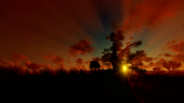 African Elephant walking with Baobab tree against beautiful sunset, 4K African Elephant walking with Baobab tree against beautiful sunset, 4K baobab tree stock videos & royalty-free footage