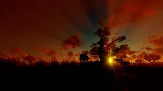 afrikanischer elefant zu fuß mit baobab baum gegen schönen sonnenuntergang, 4k - affenbrotbaum stock-videos und b-roll-filmmaterial