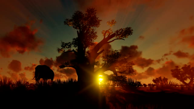 African Elephant walking with Baobab tree against beautiful sunset, panning African Elephant walking with Baobab tree against beautiful sunset, panning grass area stock videos & royalty-free footage