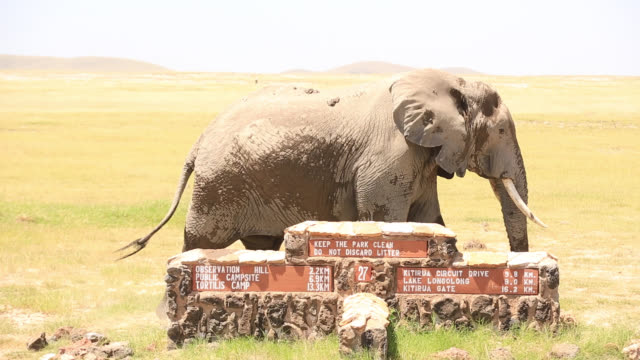 African Elephants with Calf at Amboseli National Park