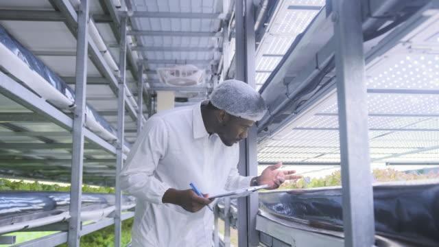 Afrikaanse farm worker noting vooruitgang van levende sla groei video