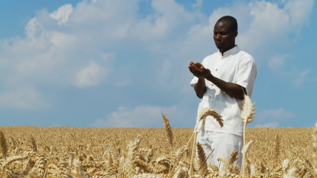 HD DOLLY: African Farmer In His Field video
