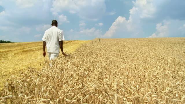 HD CRANE: African Farmer In Wheat video