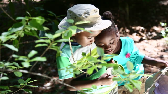 African friends playing in the nature video
