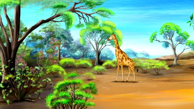 African Giraffe UHD video
