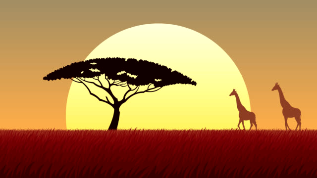 african landscape sunset - wildlife travel stock videos and b-roll footage