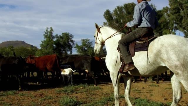 African man on horseback herds his cattle