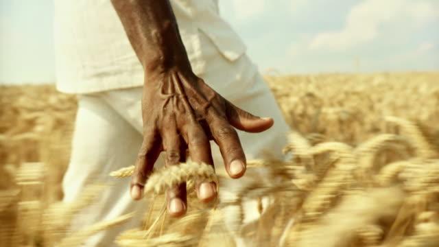 slow motion hd: uomo africano toccare grano - farmer video stock e b–roll