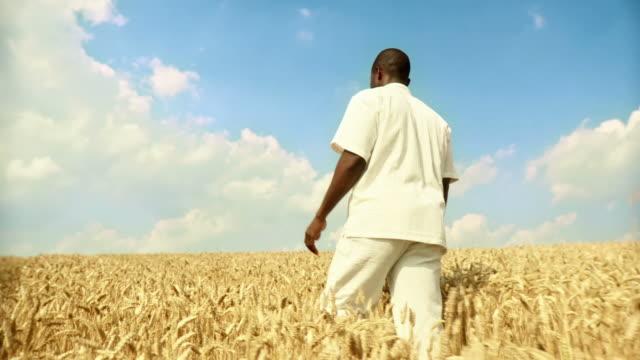 HD: African Man Walking In Wheat video